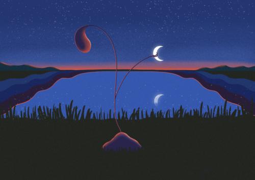 new moon in taurus, ceyda tavukcuklar